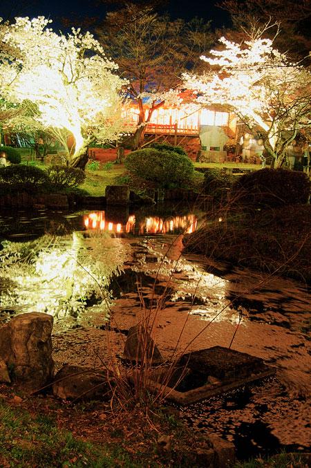 村松夜桜1