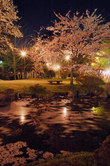 村松夜桜3