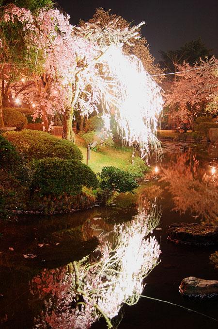 村松夜桜4