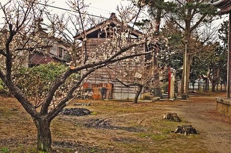 sugaharaume02.jpg