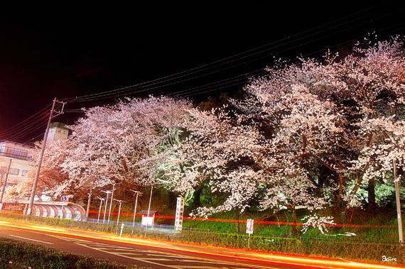 tencyouyamayozakura-05.jpg
