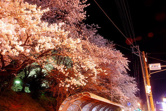 tencyouyamayozakura-06.jpg