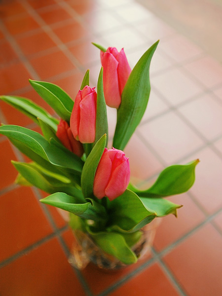 tulip06.jpg